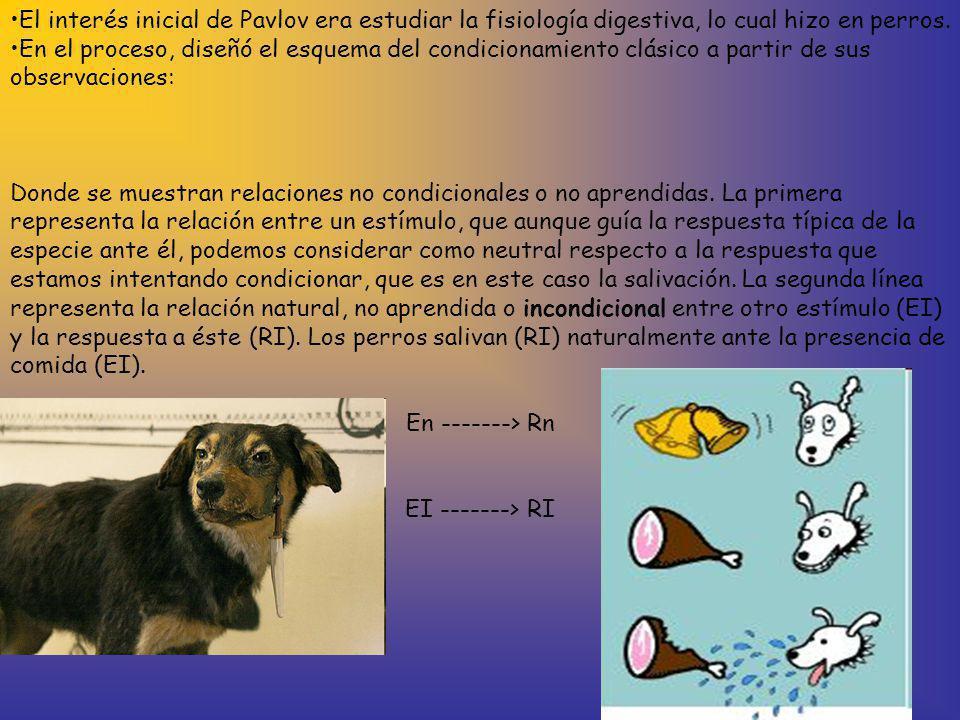 El interés inicial de Pavlov era estudiar la fisiología digestiva, lo cual hizo en perros. En el proceso, diseñó el esquema del condicionamiento clási