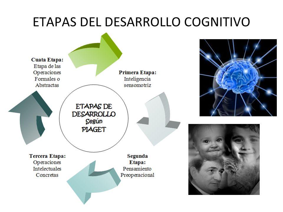 30/08/11 ETAPAS DEL DESARROLLO COGNITIVO
