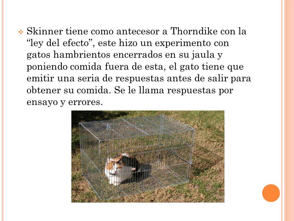 Skinner tiene como antecesor a Thorndike con la ley del efecto, este hizo un experimento con gatos hambrientos encerrados en su jaula y poniendo comida fuera de esta, el gato tiene que emitir una seria de respuestas antes de salir para obtener su comida.