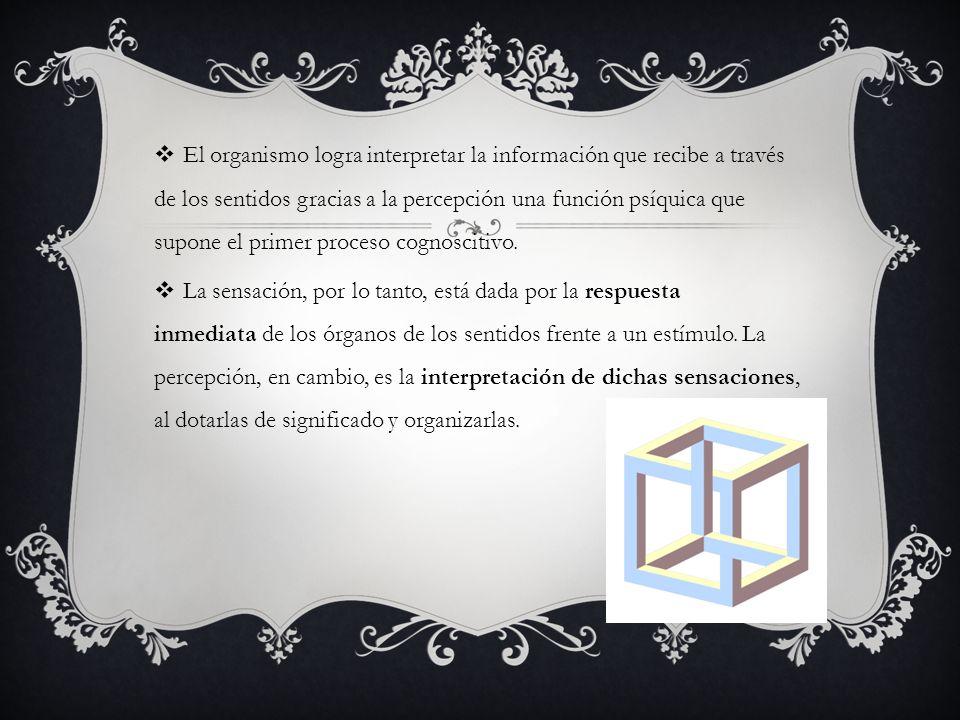 El organismo logra interpretar la información que recibe a través de los sentidos gracias a la percepción una función psíquica que supone el primer pr
