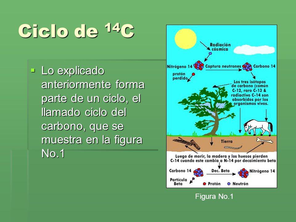 Ciclo de 14 C Lo explicado anteriormente forma parte de un ciclo, el llamado ciclo del carbono, que se muestra en la figura No.1 Lo explicado anterior