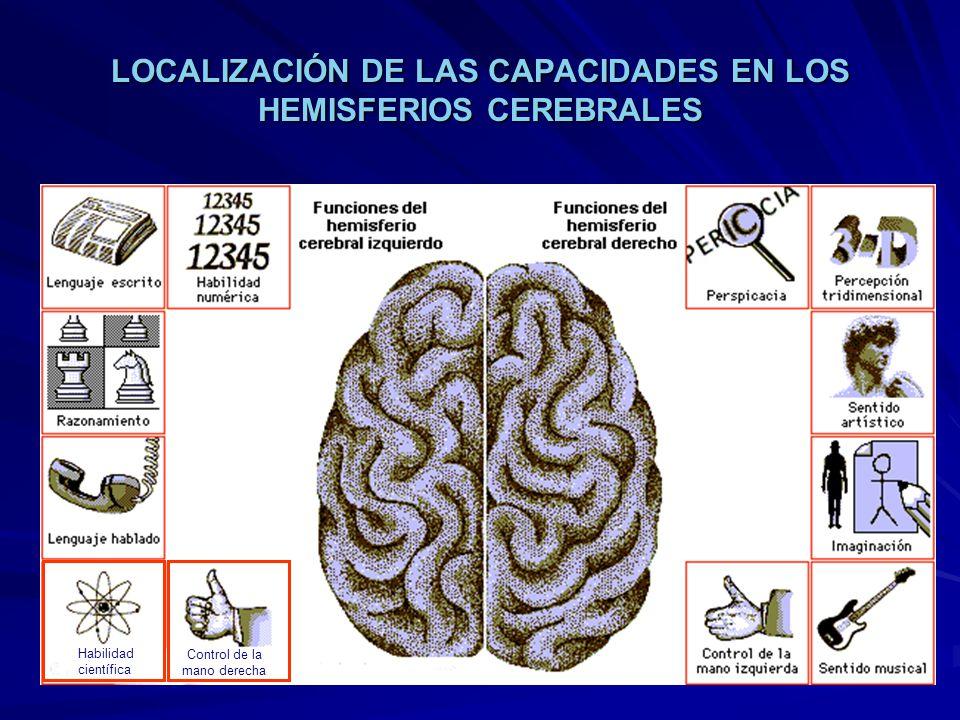 Control de la mano derecha Habilidad científica LOCALIZACIÓN DE LAS CAPACIDADES EN LOS HEMISFERIOS CEREBRALES
