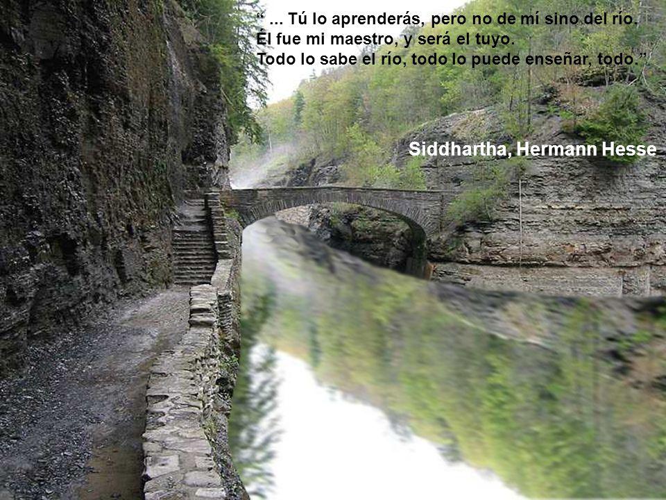 Siddhartha, Hermann Hesse... Tú lo aprenderás, pero no de mí sino del río. Él fue mi maestro, y será el tuyo. Todo lo sabe el río, todo lo puede enseñ