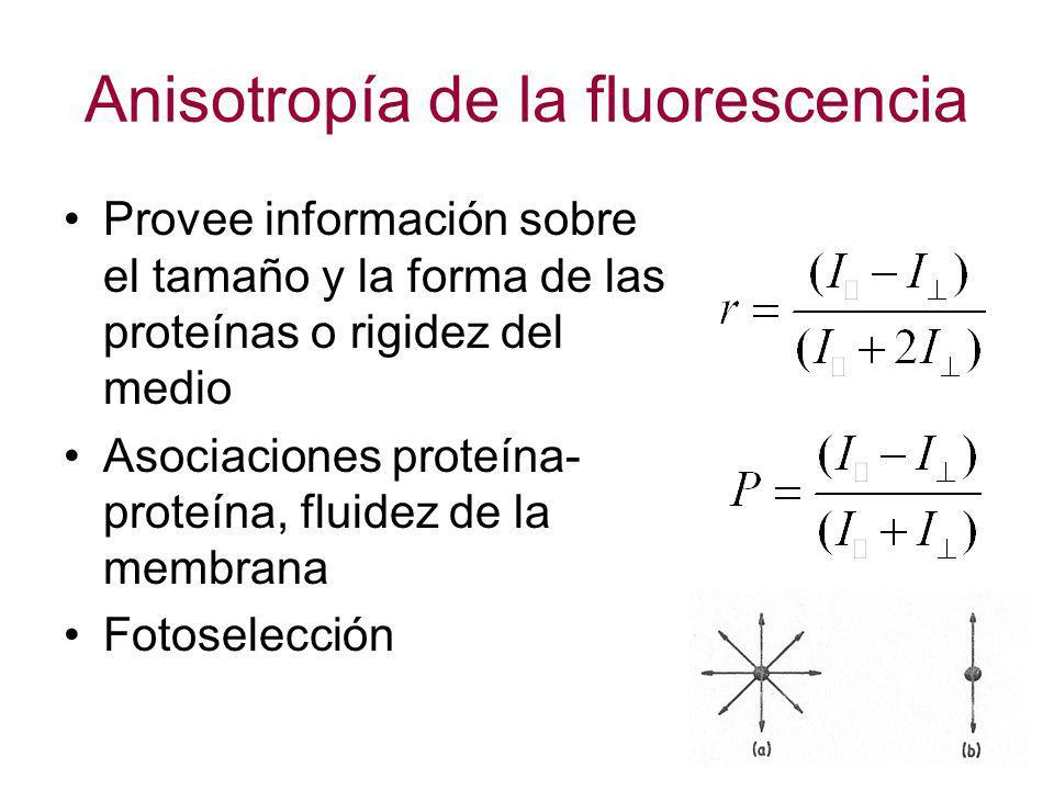 Anisotropía de la fluorescencia Provee información sobre el tamaño y la forma de las proteínas o rigidez del medio Asociaciones proteína- proteína, fl