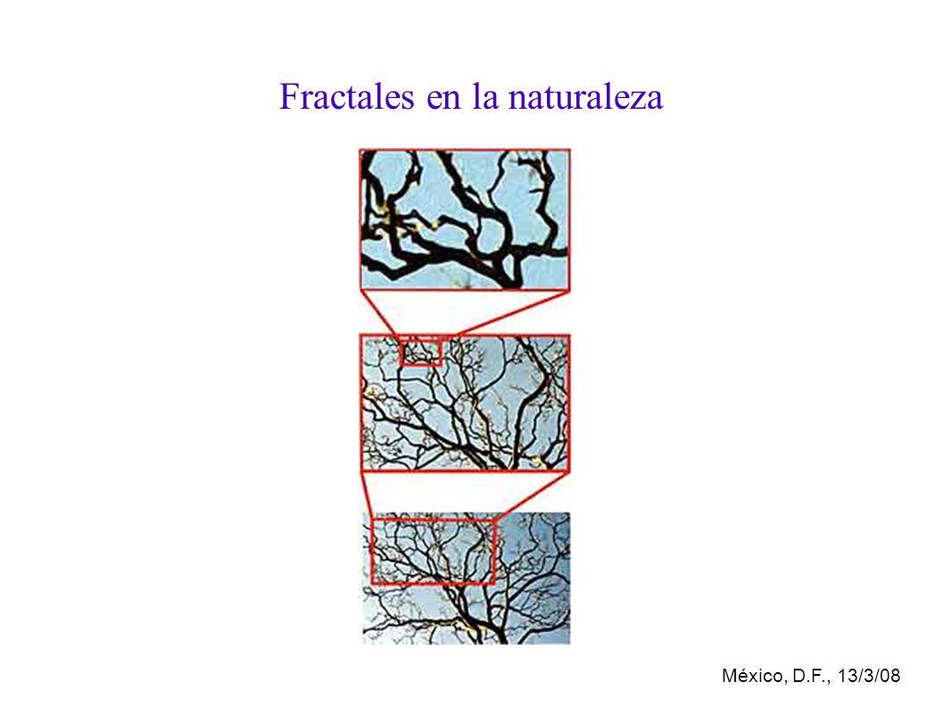 México, D.F., 13/3/08 Fractales en la naturaleza