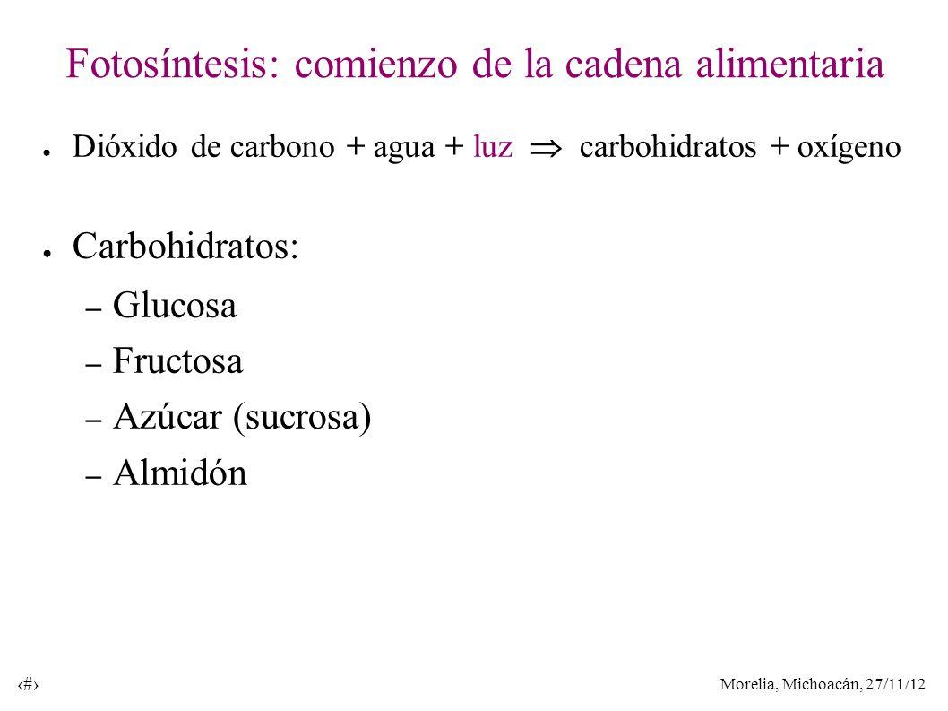 Morelia, Michoacán, 27/11/12 15 Fotosíntesis: comienzo de la cadena alimentaria Dióxido de carbono + agua + luz carbohidratos + oxígeno Carbohidratos: – Glucosa – Fructosa – Azúcar (sucrosa) – Almidón