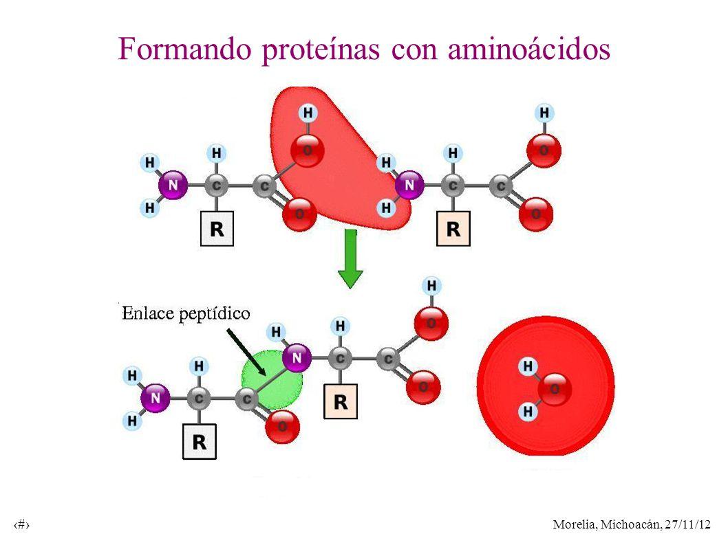 Morelia, Michoacán, 27/11/12 32 Formando proteínas con aminoácidos