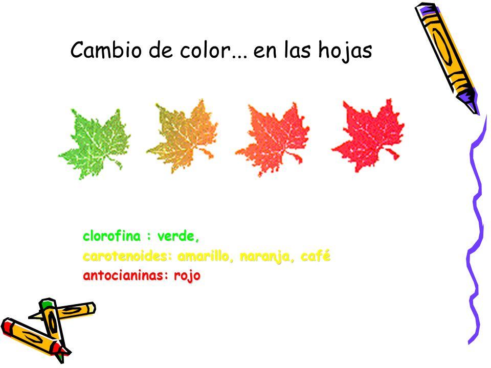 Cambio de color...