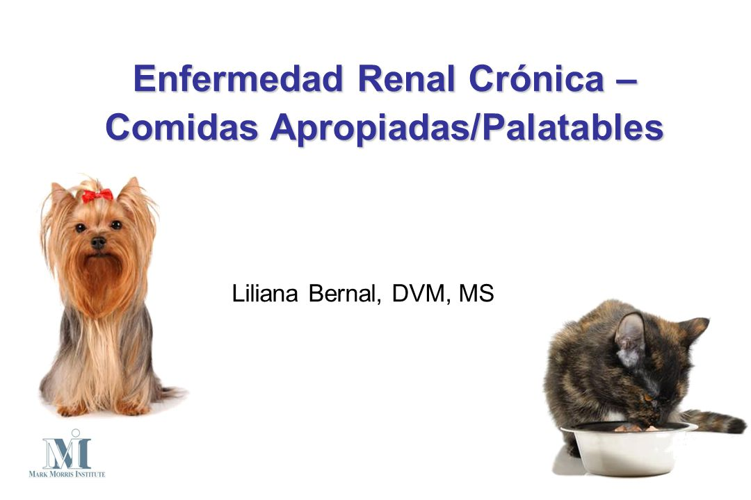 45 gatos – Enfermedad renal Comida renal (22) Comida control (23) Clinical evaluation of dietary modification for treatment of spontaneous chronic kidney disease in cats Ross S, et al.