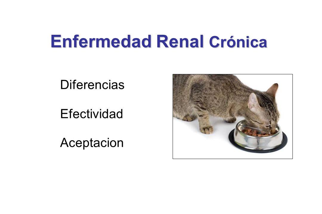 Aceptación del Alimento Renal Excelente aceptaci ó n de la dieta - 91% de gatos (en ambos grupos) - 4 pararon de comer, pero ninguno por causa de la uremia Mantuvieron peso y condici ó n corporal sin cambios significativos Ross S, et al.