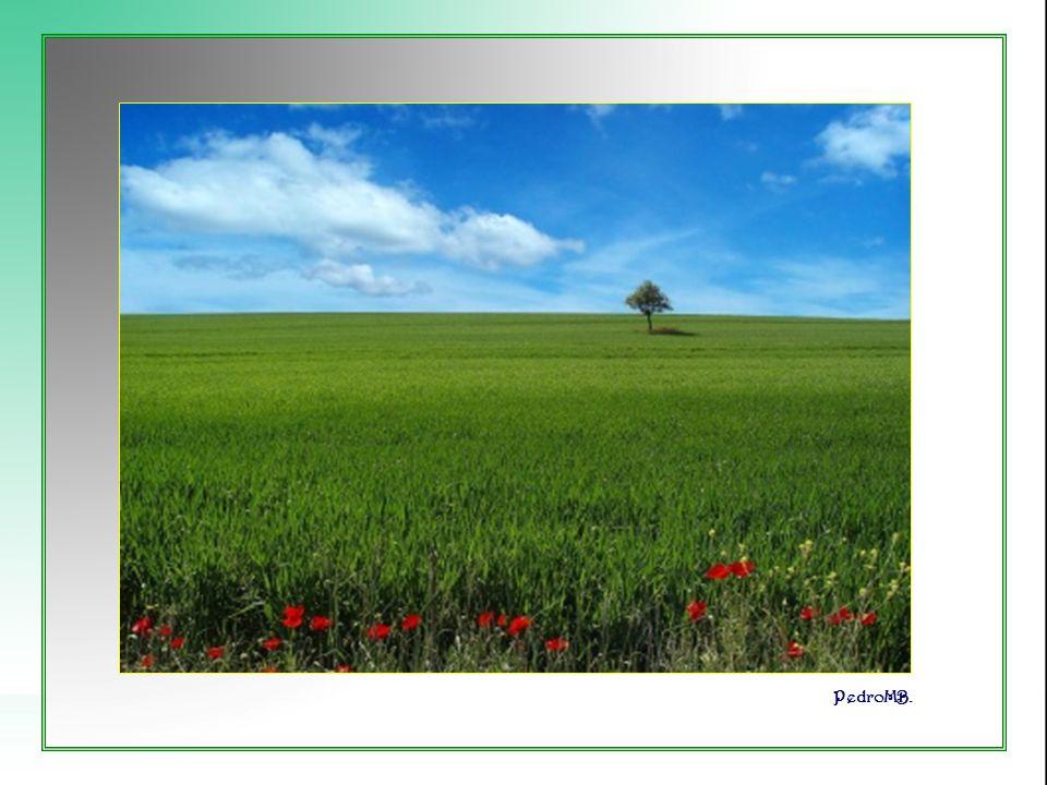 Vita Noble Powerpoints Cuando la muda melodía de las verdes hojas alienta mi esperanza. PedroMB.