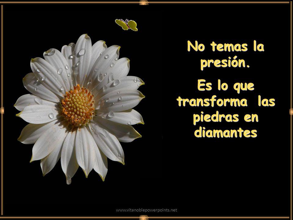 www.vitanoblepowerpoints.net No temas la presión. Es lo que transforma las piedras en diamantes