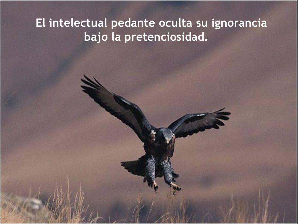 De noventa enfermedades, cincuenta las produce la culpa y cuarenta la ignorancia.