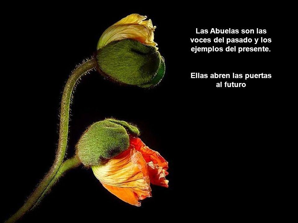 Soy una flor, una flor que se abre en busca del sol. Tú eres el sol, abuela, el sol de mi vida.