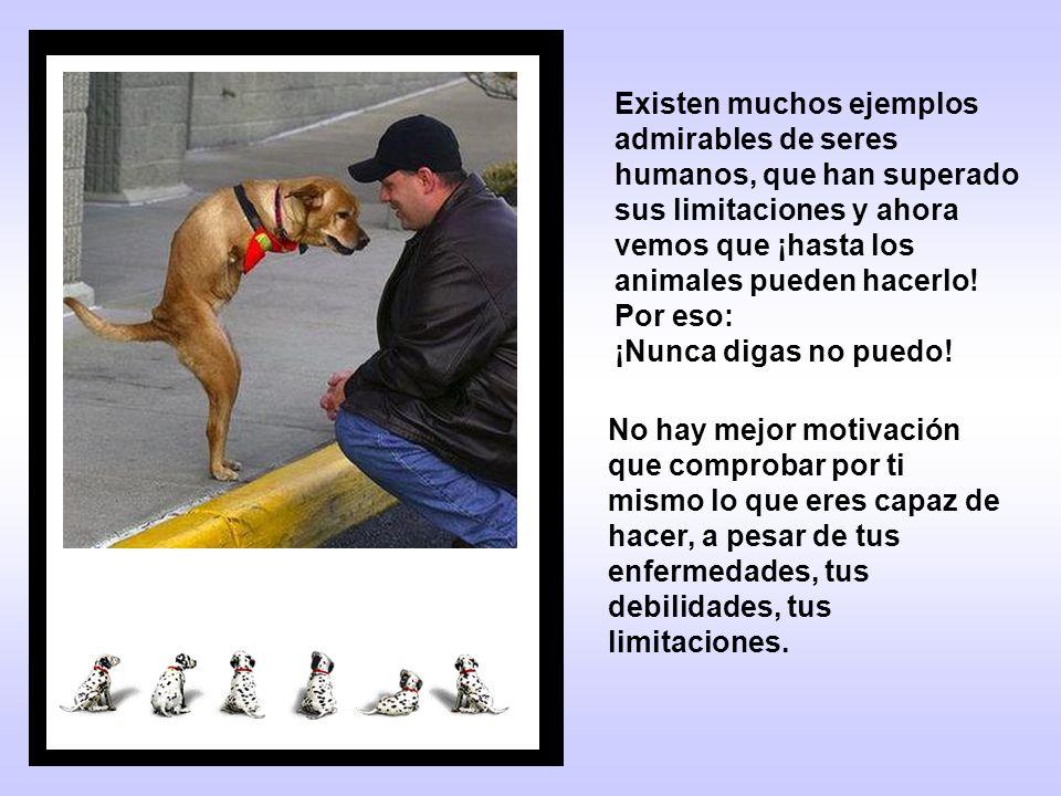Existen muchos ejemplos admirables de seres humanos, que han superado sus limitaciones y ahora vemos que ¡hasta los animales pueden hacerlo.