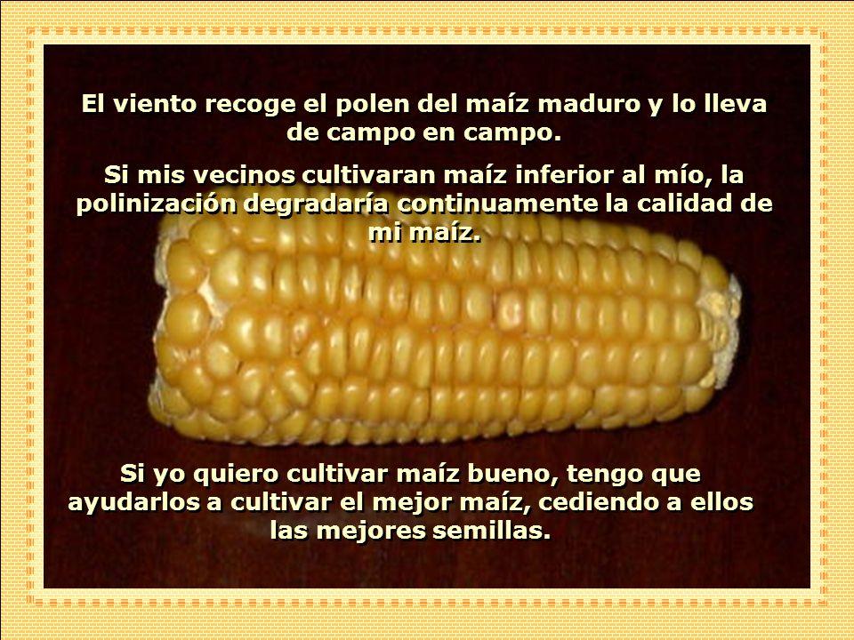 - ¿Cómo puede usted compartir sus mejores semillas con sus vecinos, cuando ellos están compitiendo directamente con usted? El agricultor respondió: -