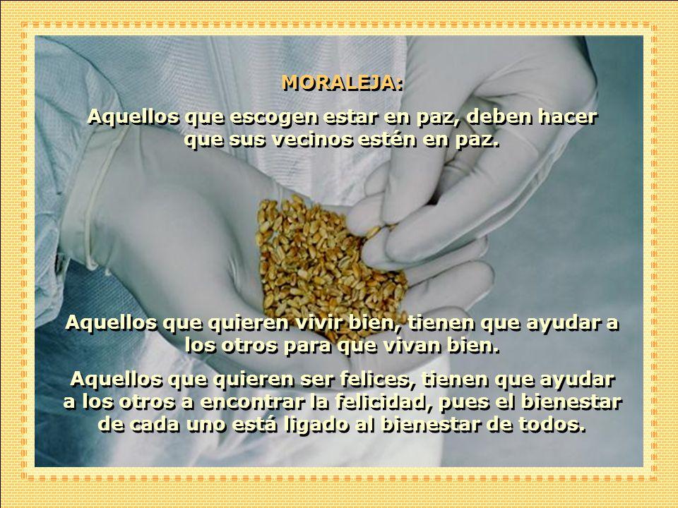 El viento recoge el polen del maíz maduro y lo lleva de campo en campo. Si mis vecinos cultivaran maíz inferior al mío, la polinización degradaría con