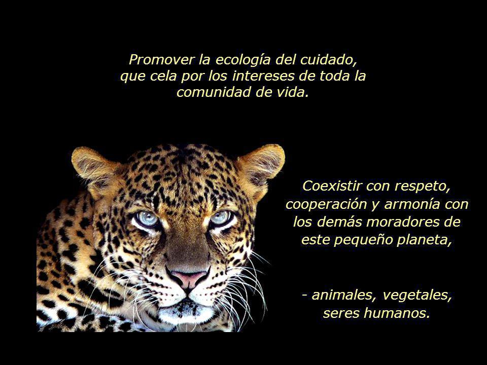 www.vitanoblepowerpoints.net Como nunca antes en la historia, el destino común nos convoca a buscar un nuevo comienzo.