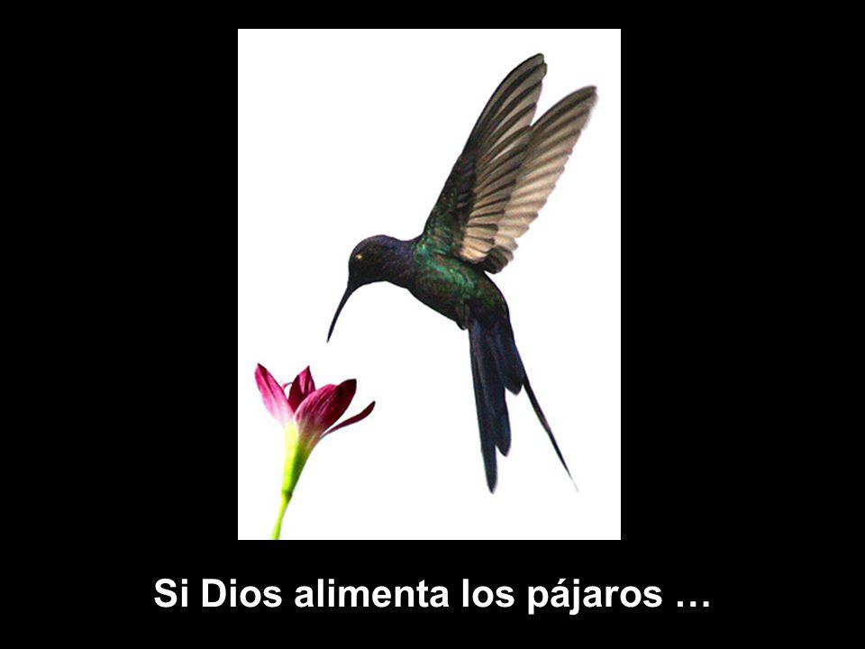 www.vitanoblepowerpoints.net Si Dios alimenta los pájaros …