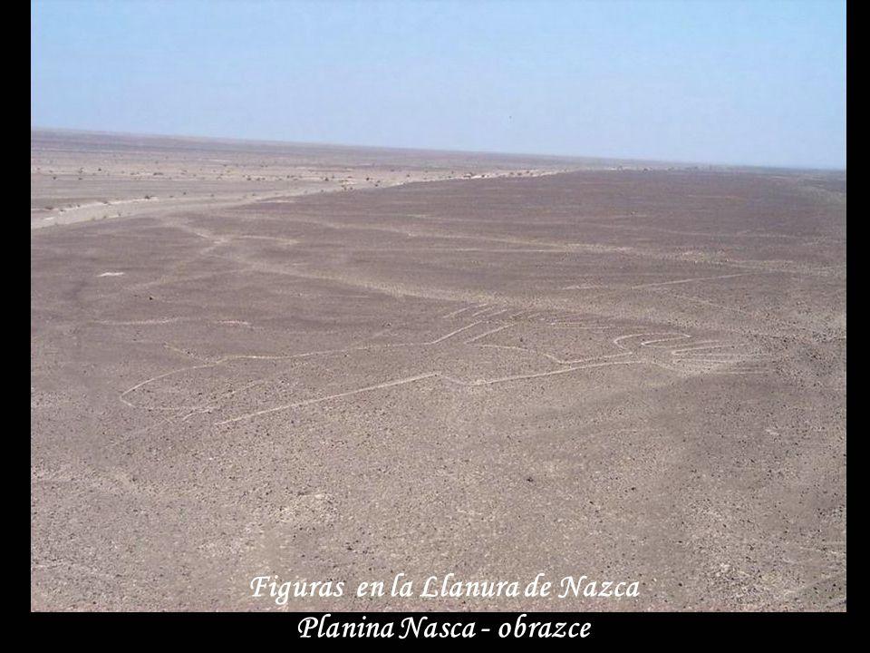 Excavaciones en Nazca Vykopávky u Nasca
