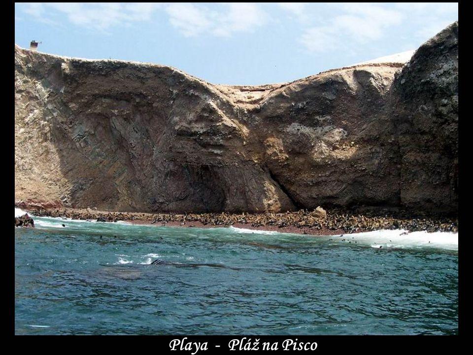 En la costa de Pisco - Na pobřeží Pisco …