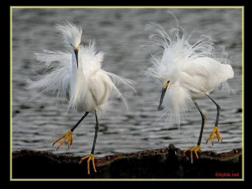 www.vitanoblepowerpoints.net Gabriel García Márquez La sabiduría nos llega cuando ya no nos sirve de nada.