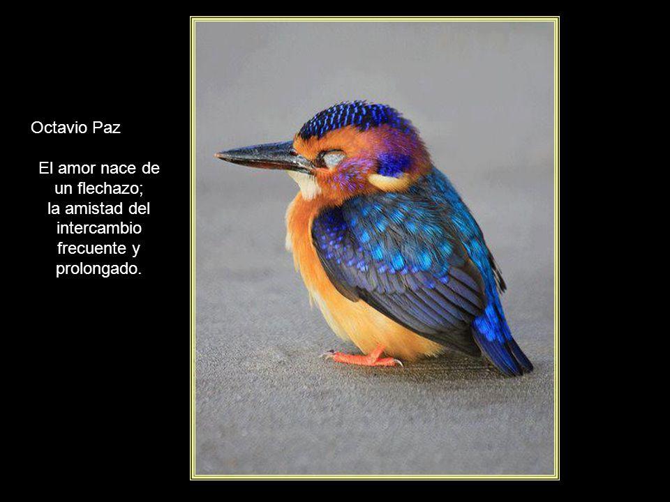 www.vitanoblepowerpoints.net Jorge Luis Borges La muerte es una vida vivida. La vida es una muerte que viene.