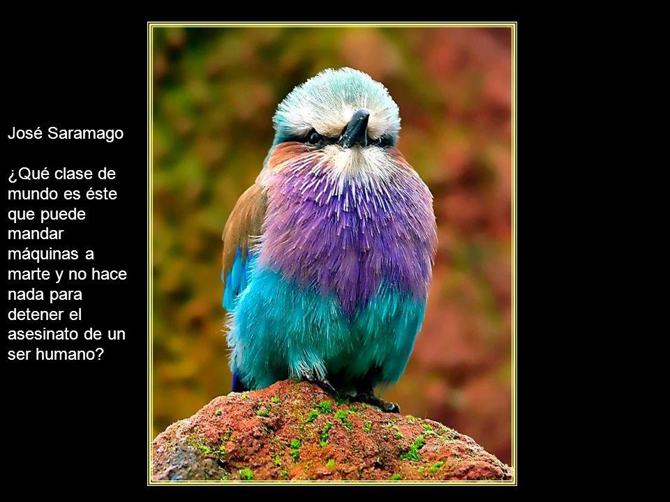 www.vitanoblepowerpoints.net José Saramago El viaje no termina jamás. Solo los viajeros terminan.