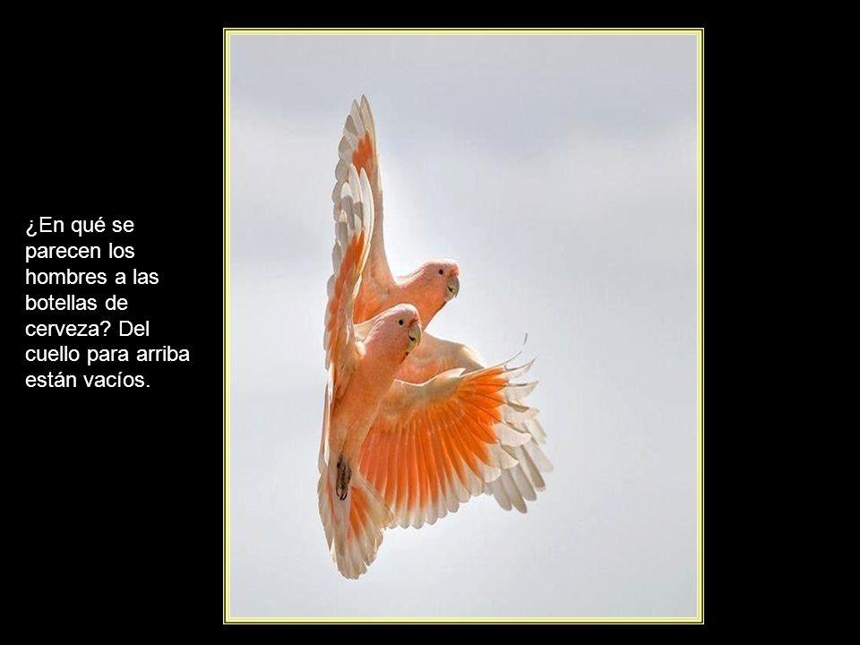 www.vitanoblepowerpoints.net Elsa Triolet El silencio es como el viento: atiza los grandes malentendidos y no extingue más que los pequeños.