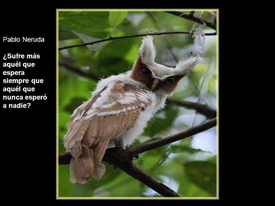 www.vitanoblepowerpoints.net Antonio Machado Si es bueno vivir, todavía es mejor soñar, y lo mejor de todo, despertar.