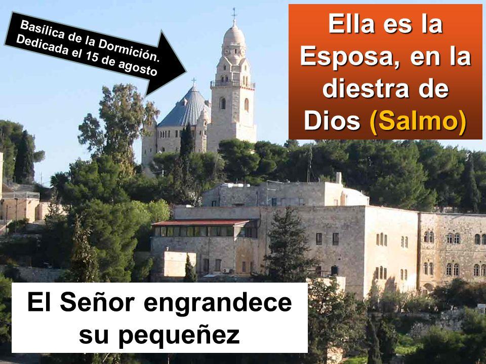 www.vitanoblepowerpoints.net María dijo:
