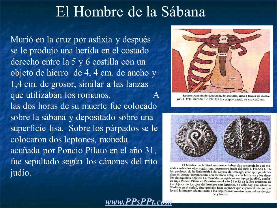 Movimientos que realizó en la cruz el hombre de la Sábana antes de morir por asfixia.