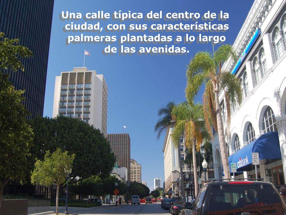 Una calle típica del centro de la ciudad, con sus características palmeras plantadas a lo largo de las avenidas.