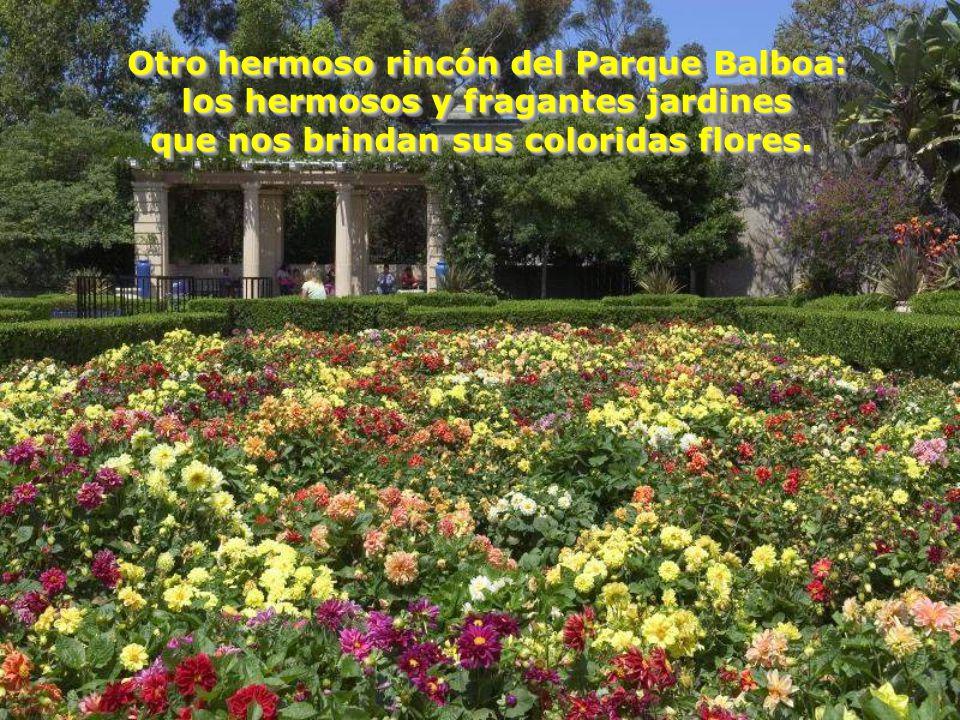 Otro hermoso rincón del Parque Balboa: los hermosos y fragantes jardines que nos brindan sus coloridas flores.