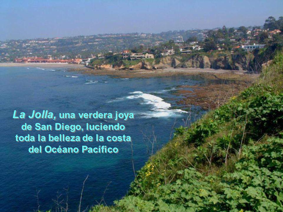La Jolla, una verdera joya de San Diego, luciendo toda la belleza de la costa del Océano Pacífico La Jolla, una verdera joya de San Diego, luciendo toda la belleza de la costa del Océano Pacífico