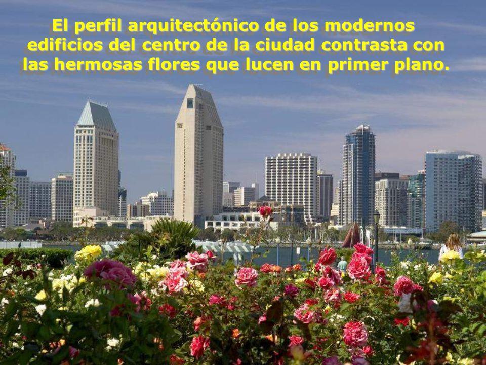 El perfil arquitectónico de los modernos edificios del centro de la ciudad contrasta con las hermosas flores que lucen en primer plano.