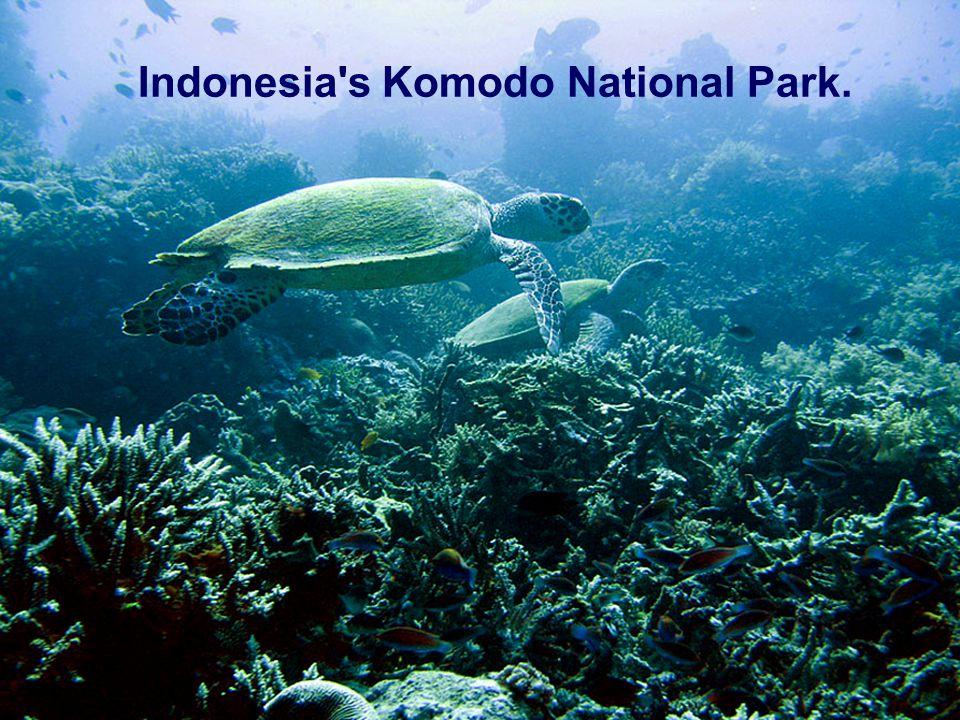 Indonesia's Komodo national park. Indonesia's Komodo National Park.