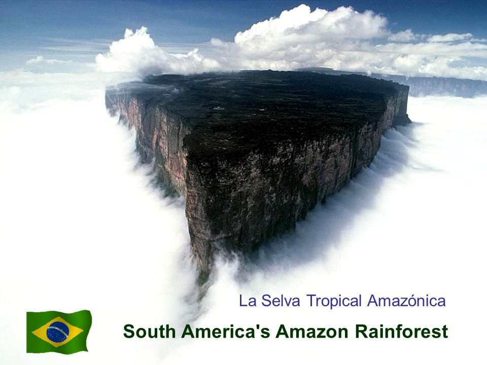 South America s Amazon Rainforest La Selva Tropical Amazónica