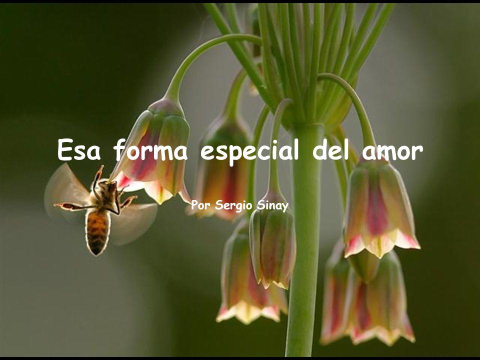 www.vitanoblepowerpoints.net Esa forma especial del amor Por Sergio Sinay