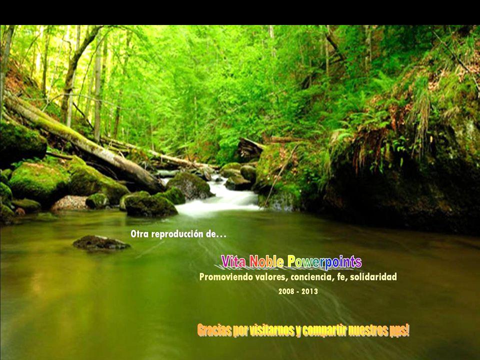 www.vitanoblepowerpoints.net Zonnebloem Y cada amigo fue, es y será... una joya única.