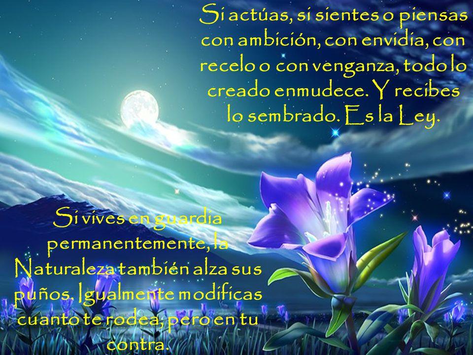 www.vitanoblepowerpoints.net Si miras, si sientes con Amor y actúas con gentileza y bondad, la Naturaleza, todo lo creado, queda automáticamente modificado, y te responde con la misma moneda: con Amor.