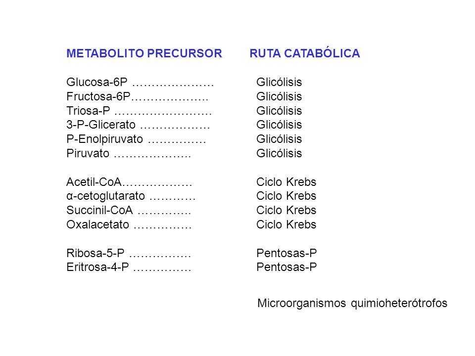 METABOLITO PRECURSOR RUTA CATABÓLICA Glucosa-6P …………………Glicólisis Fructosa-6P……………….. Glicólisis Triosa-P ……………………. Glicólisis 3-P-Glicerato ……………… Gl