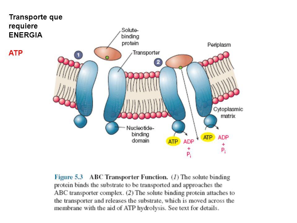 Transporte que requiere ENERGIA ATP