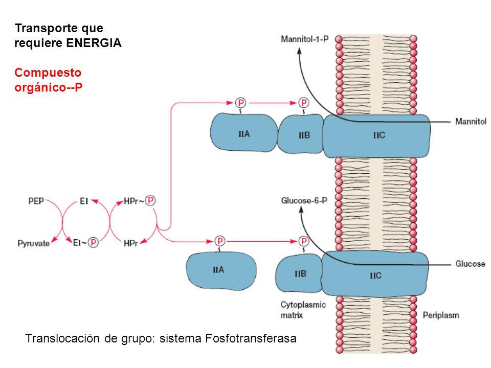 Translocación de grupo: sistema Fosfotransferasa Transporte que requiere ENERGIA Compuesto orgánico--P
