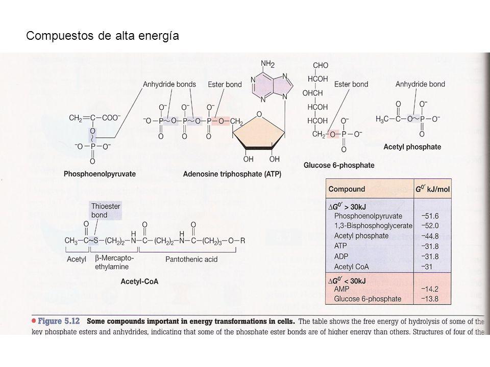 Microorganismos fermentadores: ATP ATPasa Potencial de membrana Movilidad, transporte, otros Microorganismos respiradores/fotosintéticos: Transporte de e- Potencial de membrana ATP ATPasa