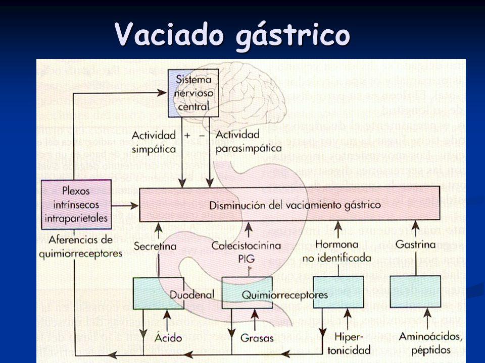 Vaciado gástrico