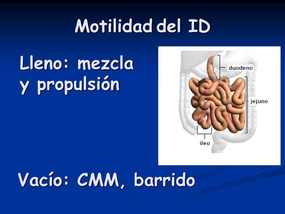 Motilidad del ID Lleno: mezcla y propulsión Vacío: CMM, barrido