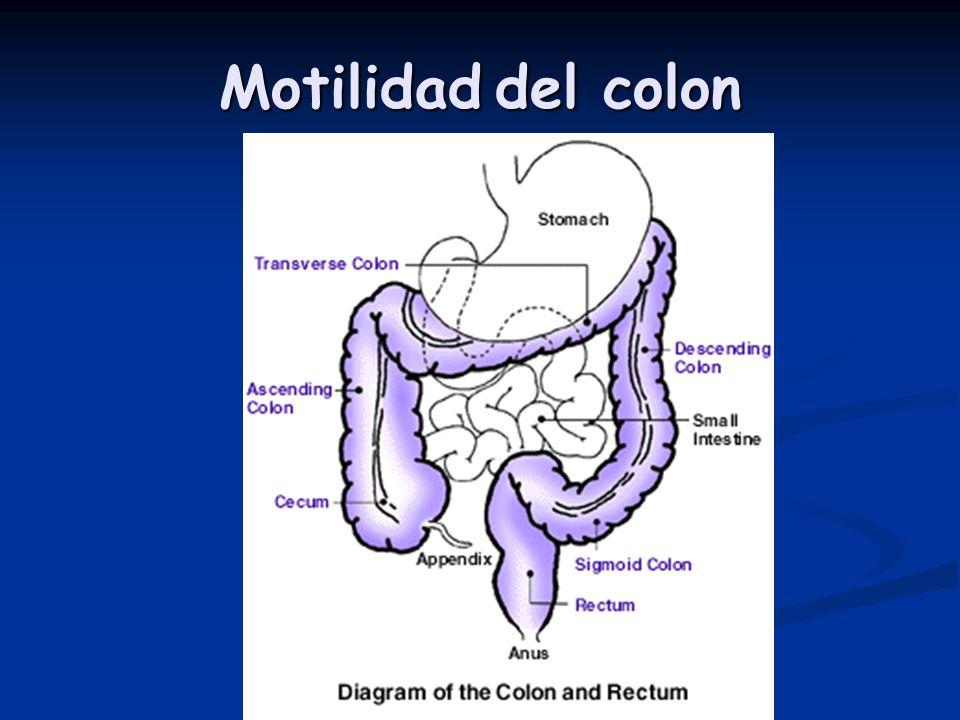 Motilidad del colon