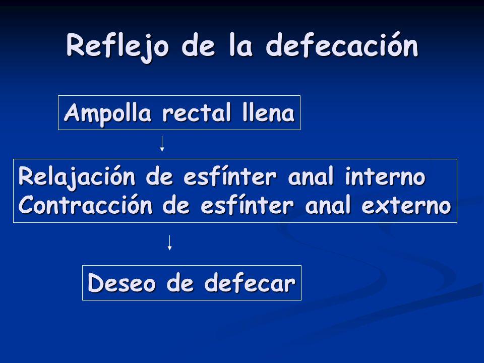 Reflejo de la defecación Ampolla rectal llena Relajación de esfínter anal interno Contracción de esfínter anal externo Deseo de defecar