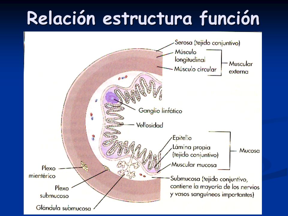 Segmentaciones ( haustras )